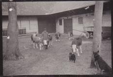 Historische Bilder Köfering